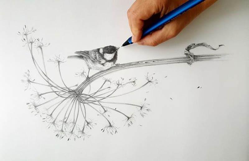 learn drawing a bird